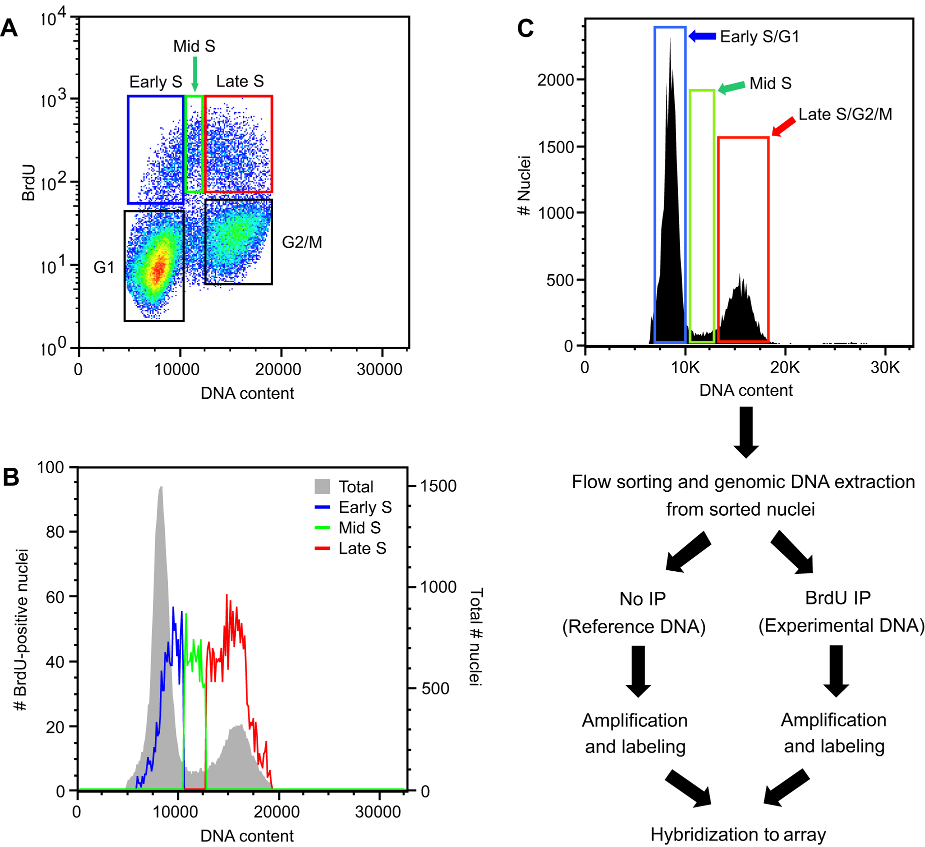 Flow cytometric analysis of <i>Arabidopsis</i> cell suspension culture.