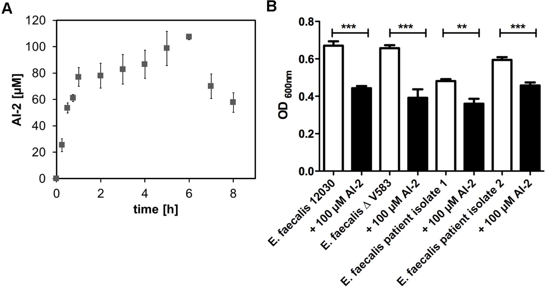 Time course of AI-2 production during growth of <i>E. faecalis</i> V583ΔABC (A) and biofilm formation of <i>E. faecalis</i> 12030, V583 ΔABC and two clinical isolates of <i>E. faecalis</i> (B).