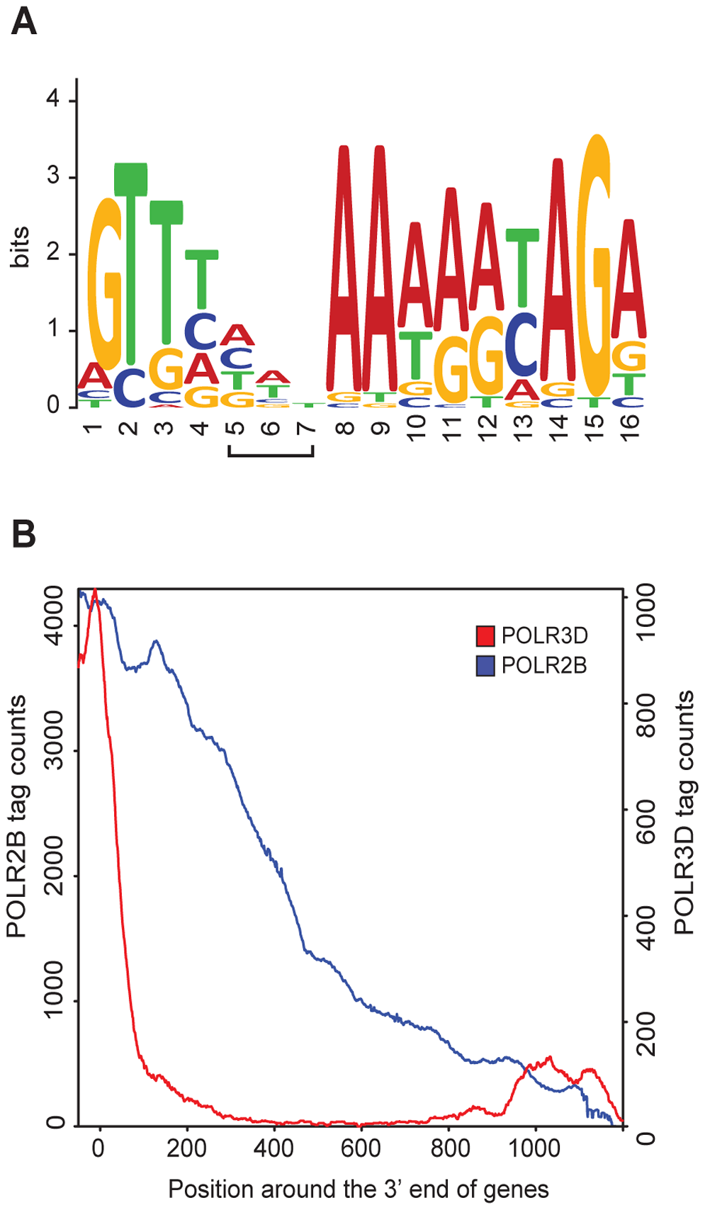 RNA pol II and III occupancy within 3′ flanking regions.