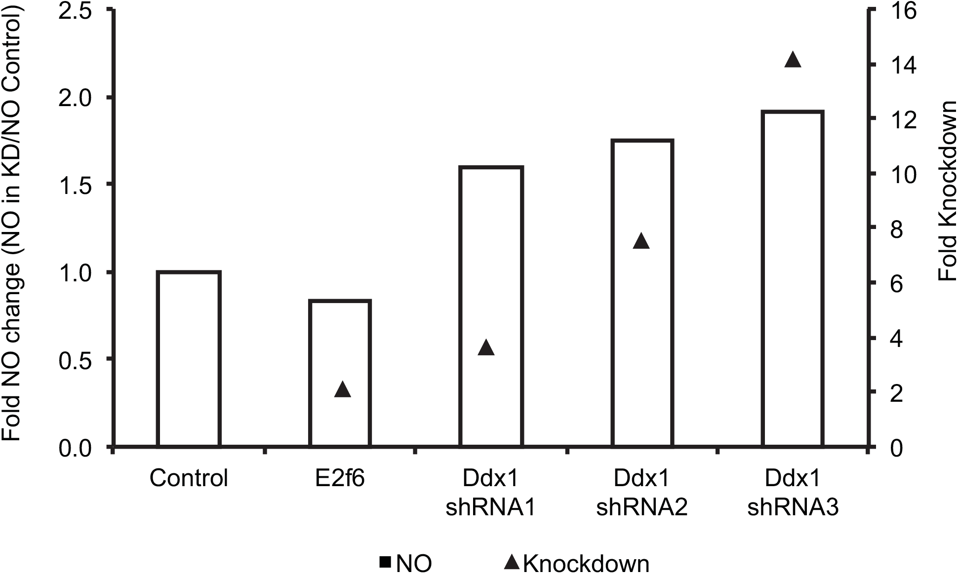 shRNA- mediated <i>Ddx1</i> knockdown in C57BL/B6J immortalized macrophages relieves NO inhibition.