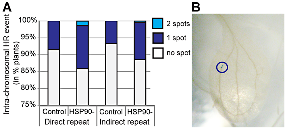 HSP90 inhibition increases homologous recombination in plants.