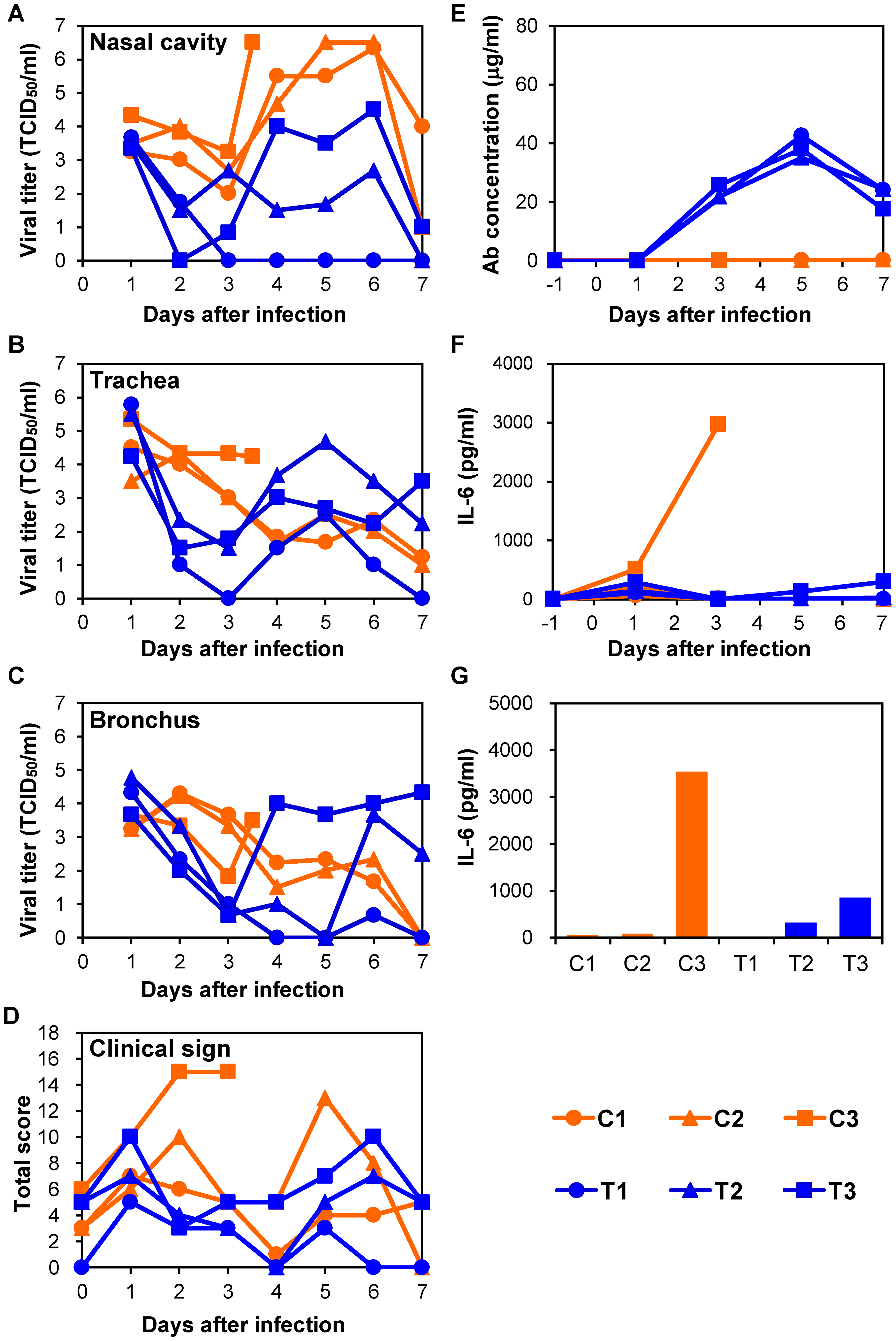 Protection of immunocompetent macaques treated with MAb ch61 against VN3040 infection.
