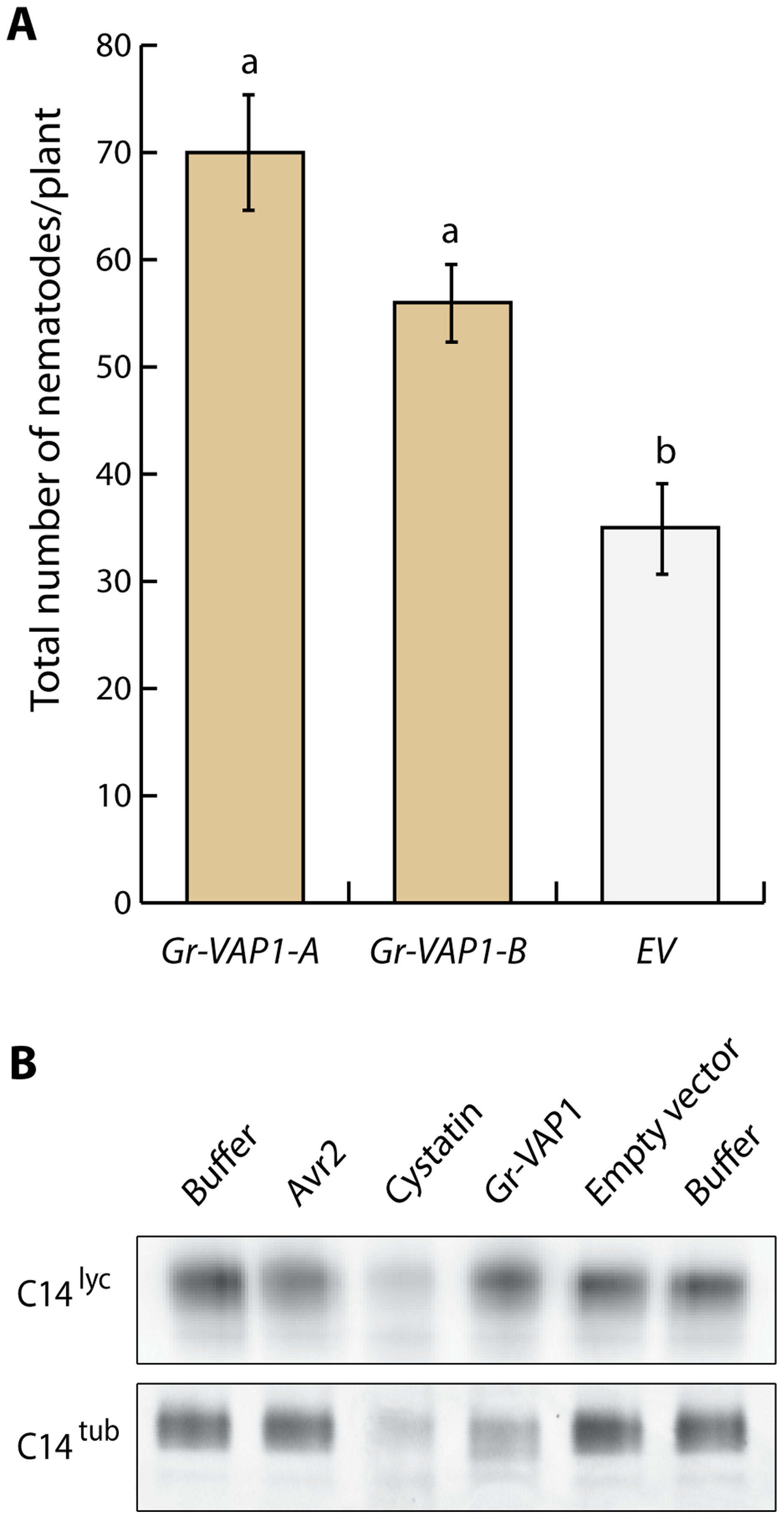 Apoplastic Gr-VAP1 suppresses immunity of potato plants to <i>G. rostochiensis</i>.