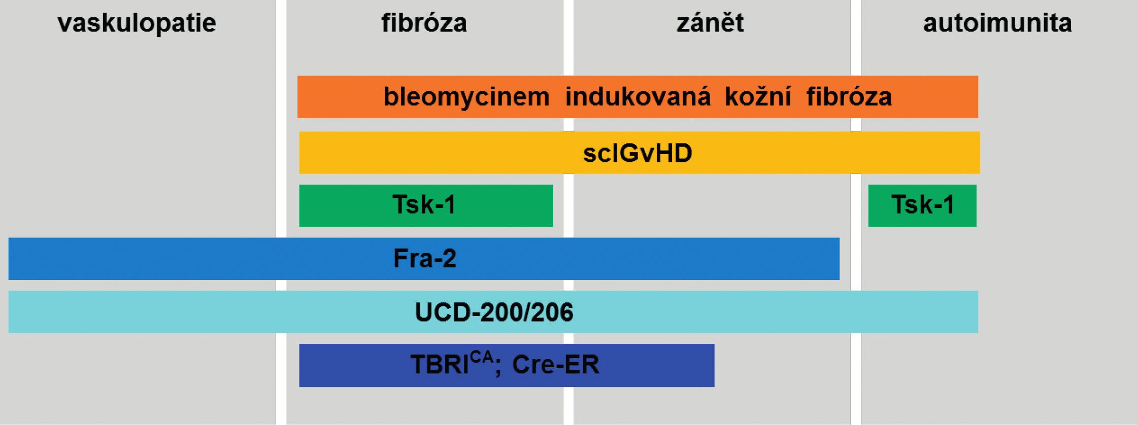 Přehled nejpoužívanějších zvířecích modelů SSc a zastoupení patogenetických mechanismů charakteristických pro SSc. (Upraveno podle Beyer C. et al., 2010) sclGvHD, Chronická sklerodermatózní reakce štěpu proti hostiteli; Tsk-1, Tight skin-1 myši; Fra-2, Fra-2 transgenní myši; UCD-200/206; kuřata linie UCD-200 a UCD-206; TBRICA; Cre-ER, TBRICA; Cre-ER myši