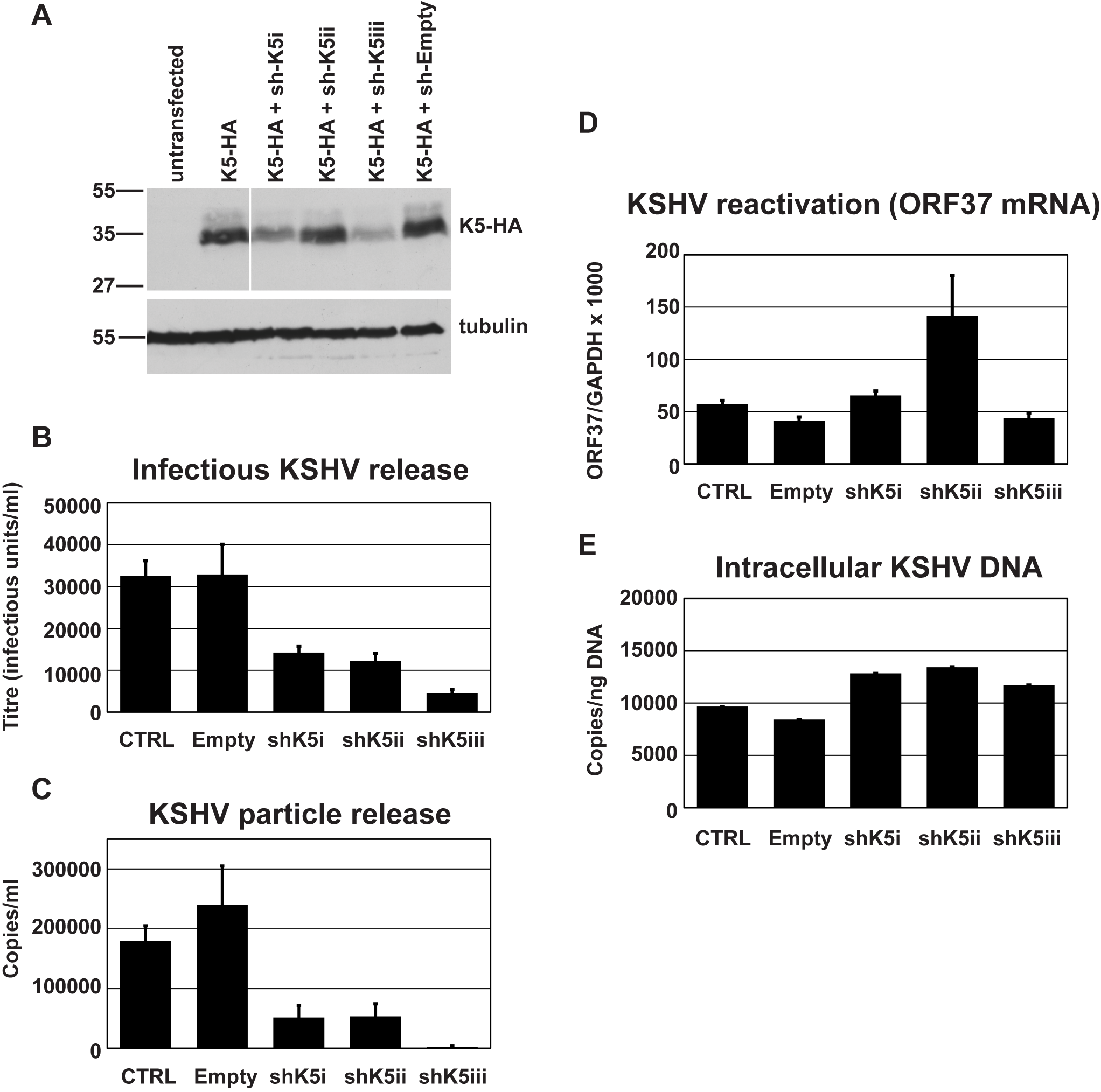 RNAi-depletion of K5 during lytic replication suppresses KSHV particle release.