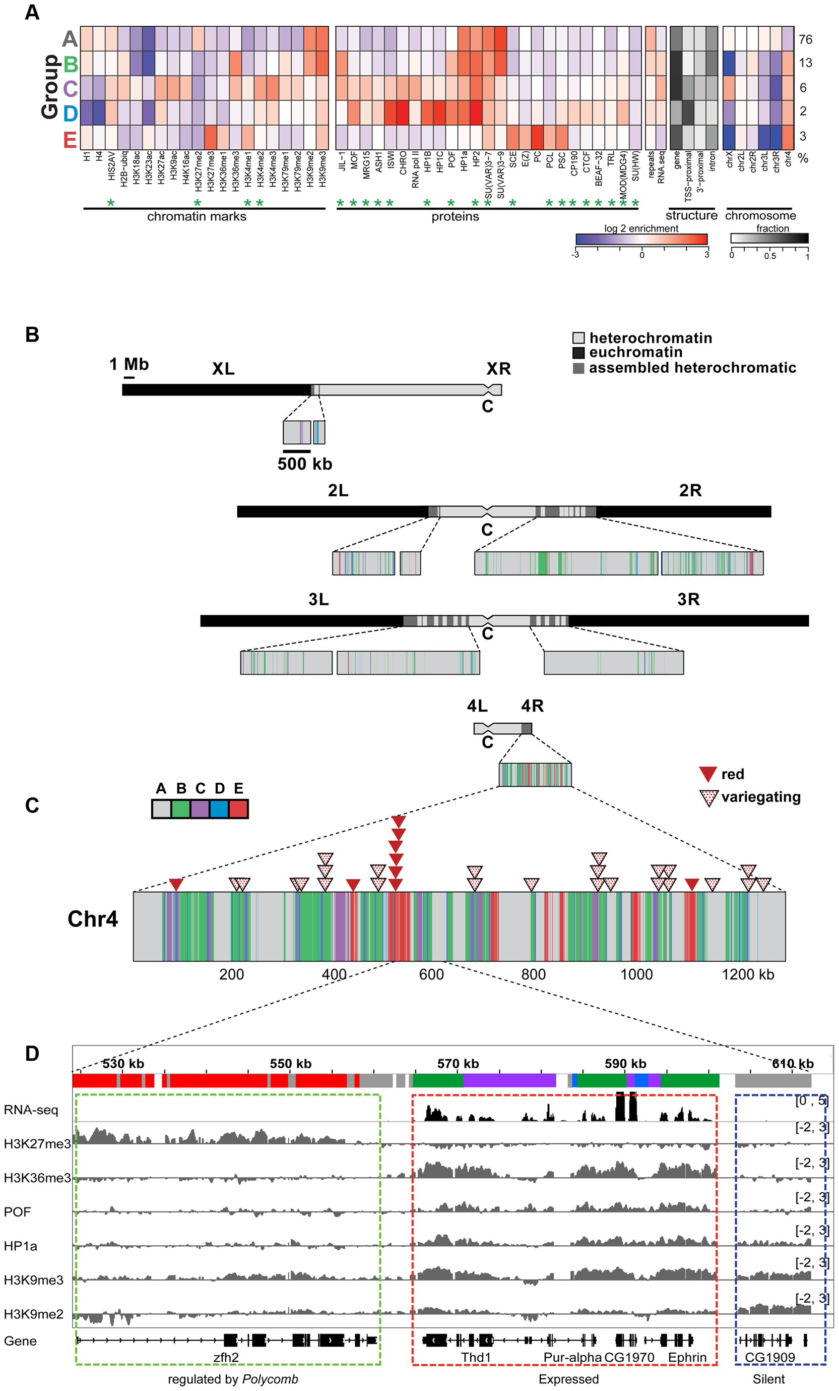 The chromatin composition of <i>D. melanogaster</i> chromosome 4 shows distinct patterns of enrichment.