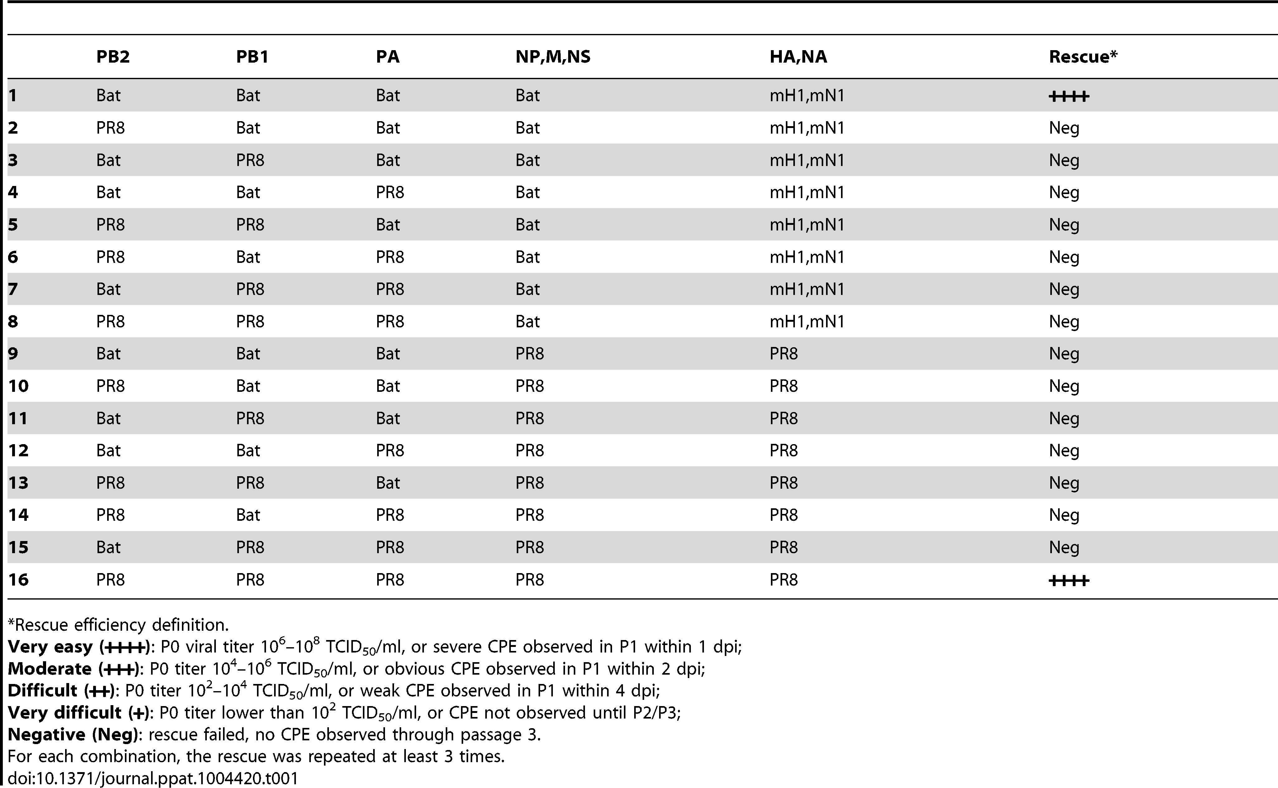 Rescue efficiency of PB2, PB1, PA reassortants between Bat09:mH1mN1 and PR8.