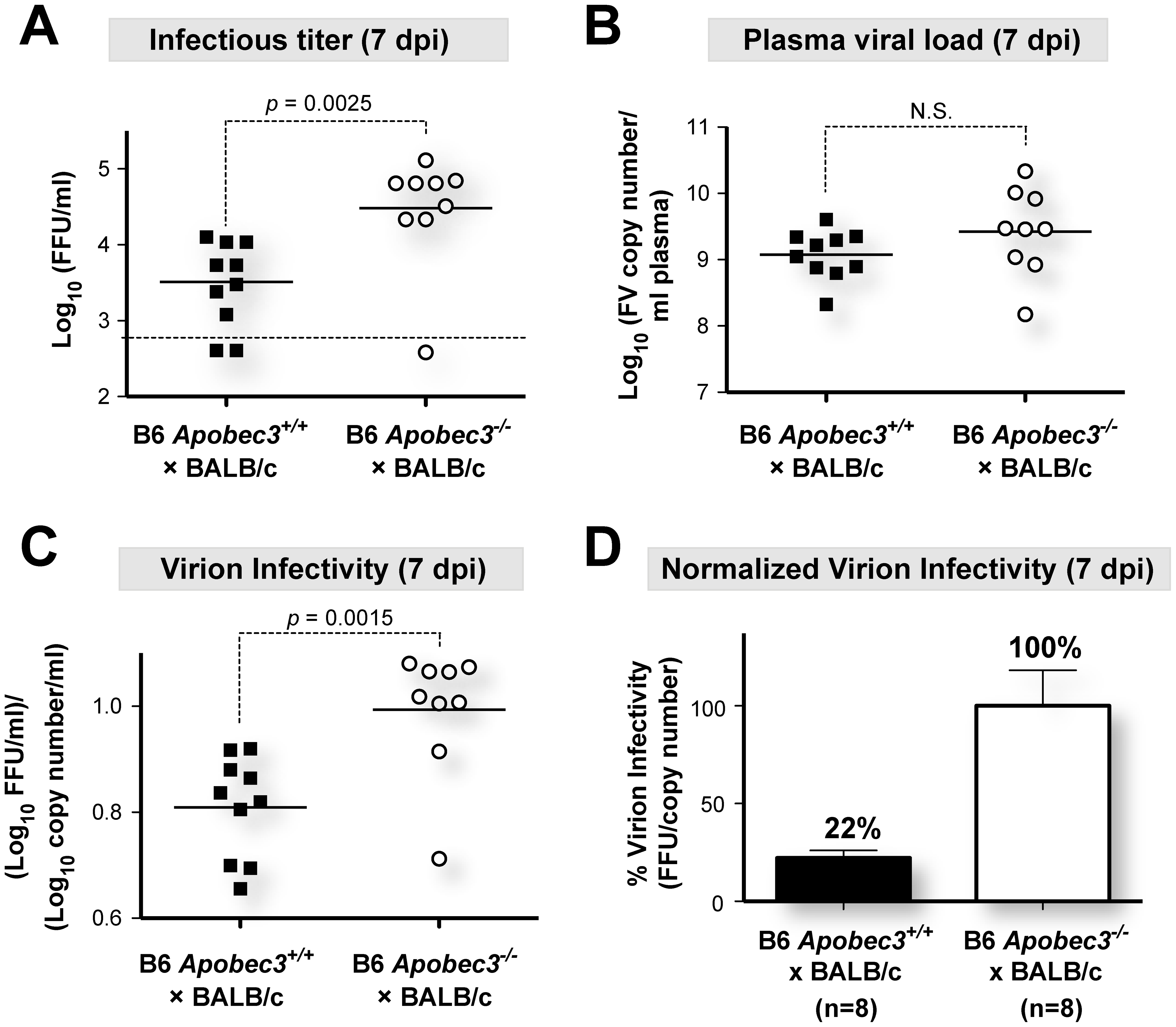 B6 <i>mA3</i> promotes noninfectious particle release during acute FV infection.