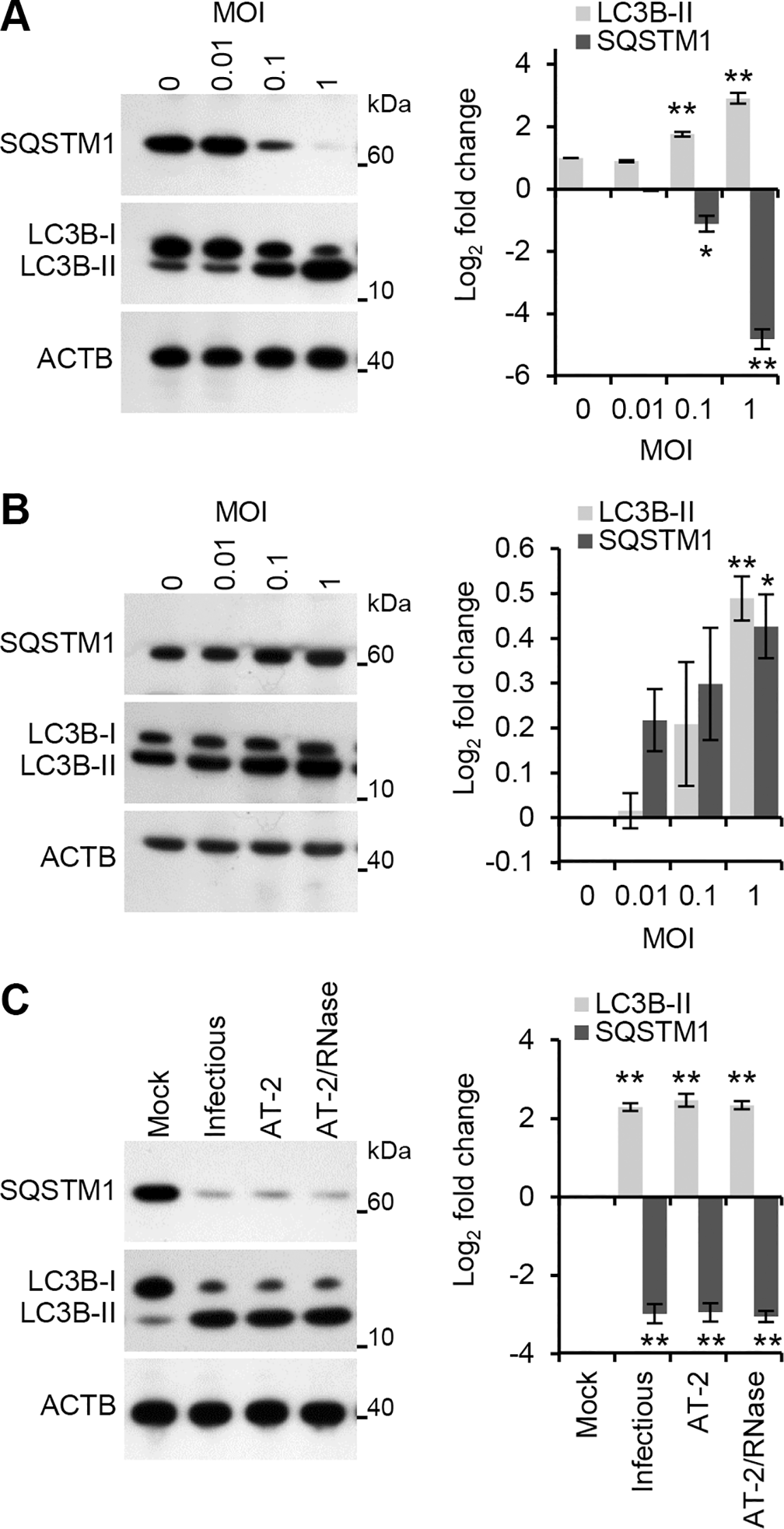 HIV induces autophagy in human macrophages.