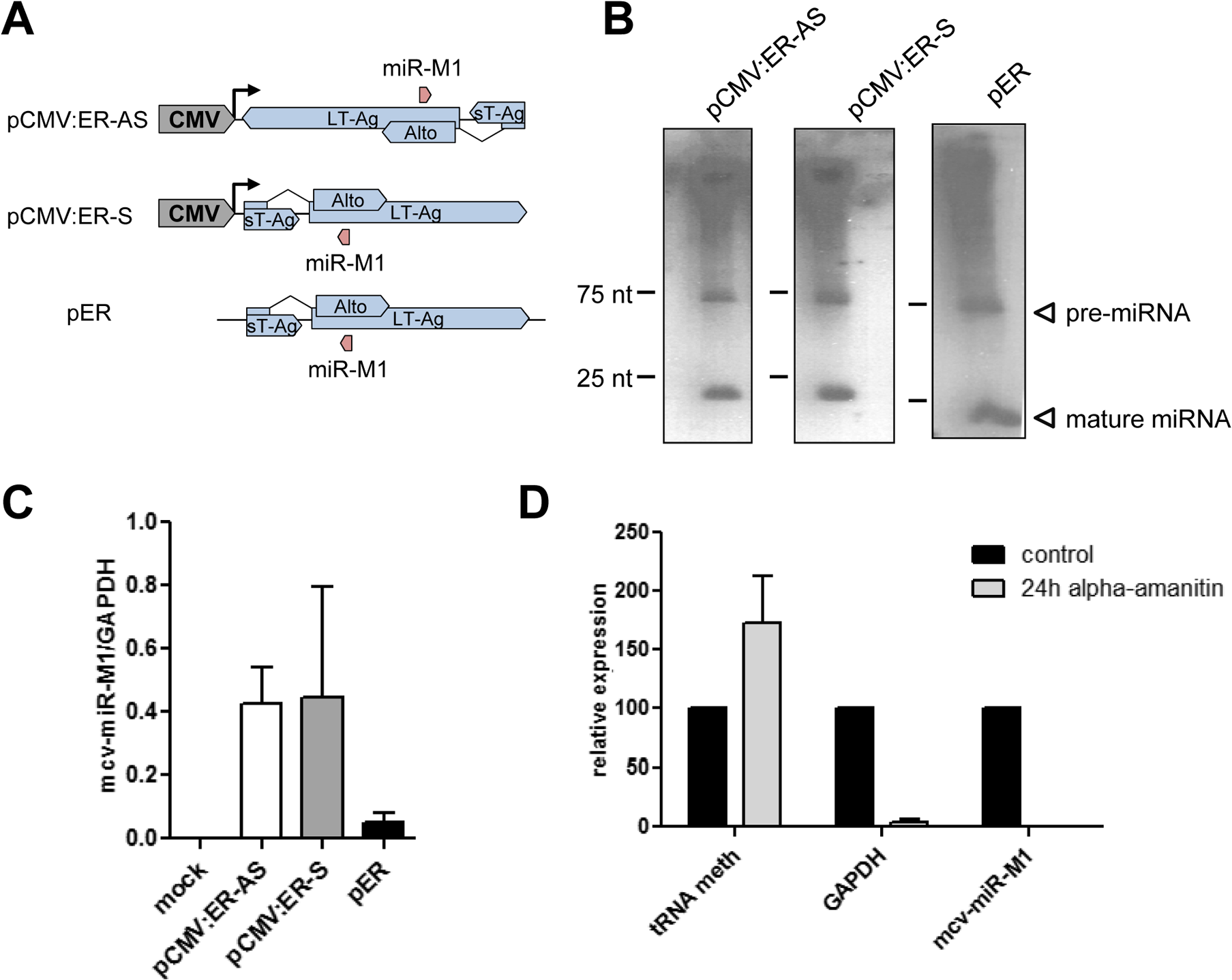 mcv-miR-M1 can be expressed independently of NCCR-initiated late gene expression.