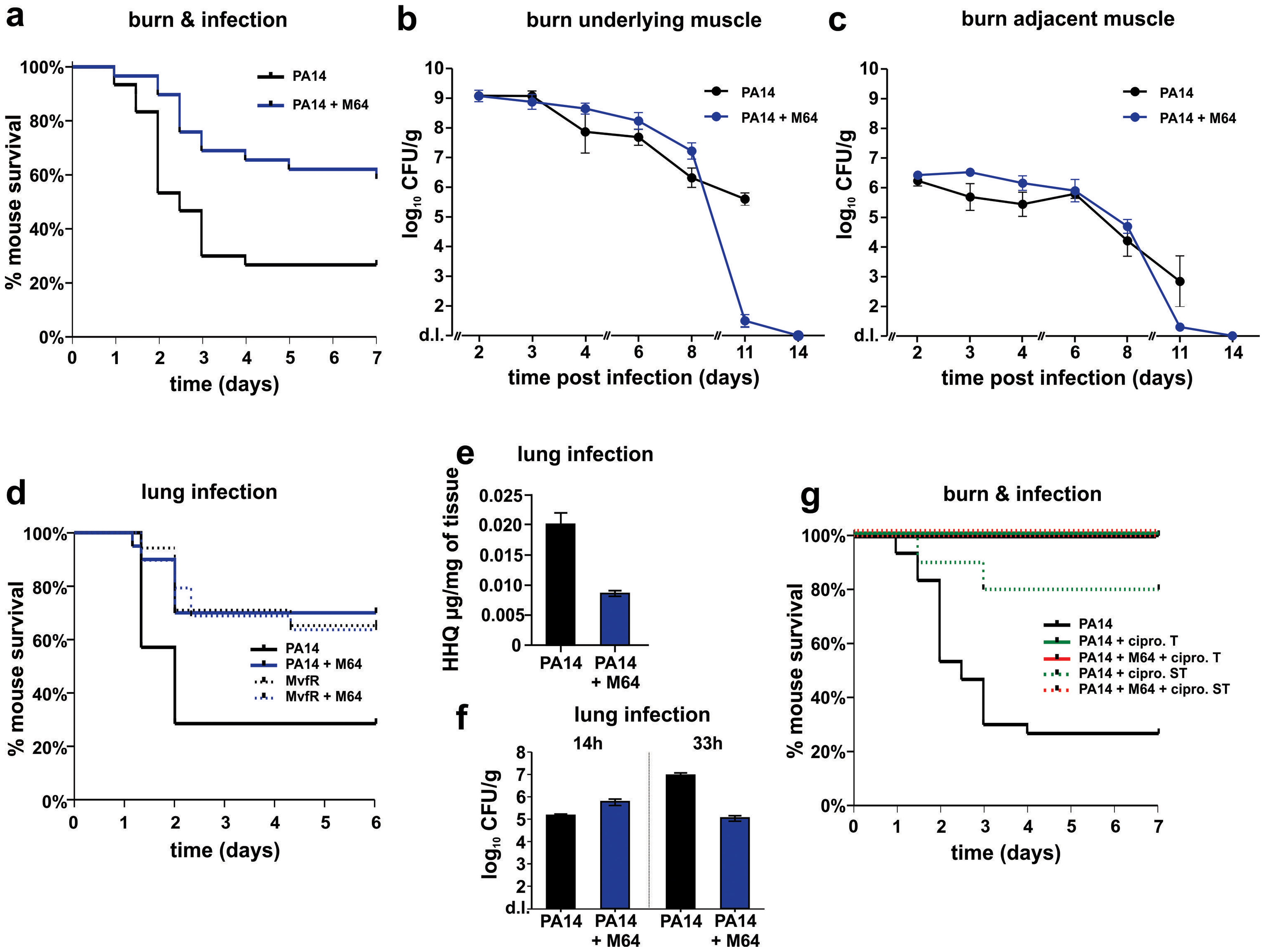 M64 reduces PA14 virulence in mouse burn infection, and lung infection, models.