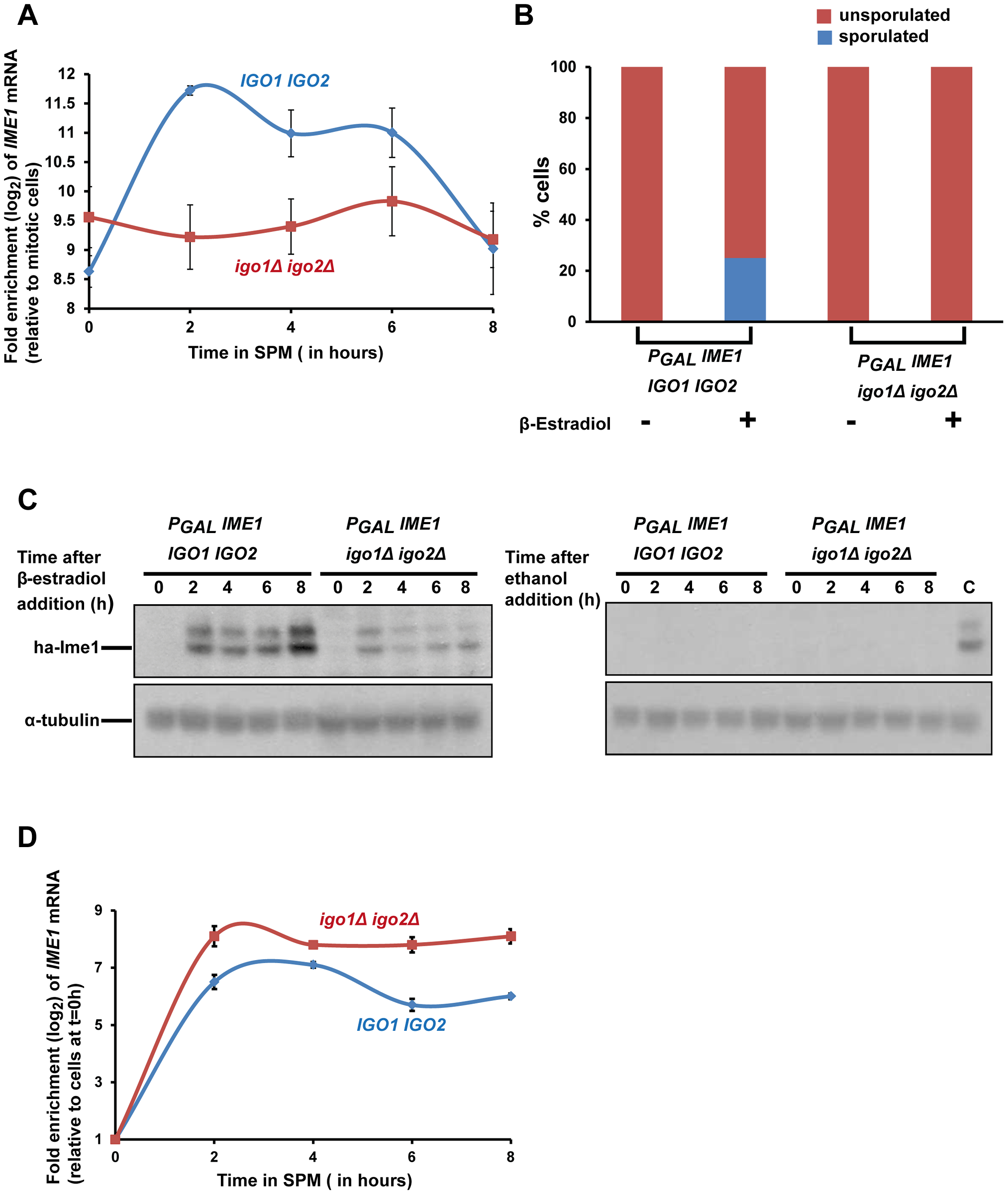 Endosulfines are required for transcriptional induction of <i>IME1</i> caused by transfer of cells to sporulation medium.