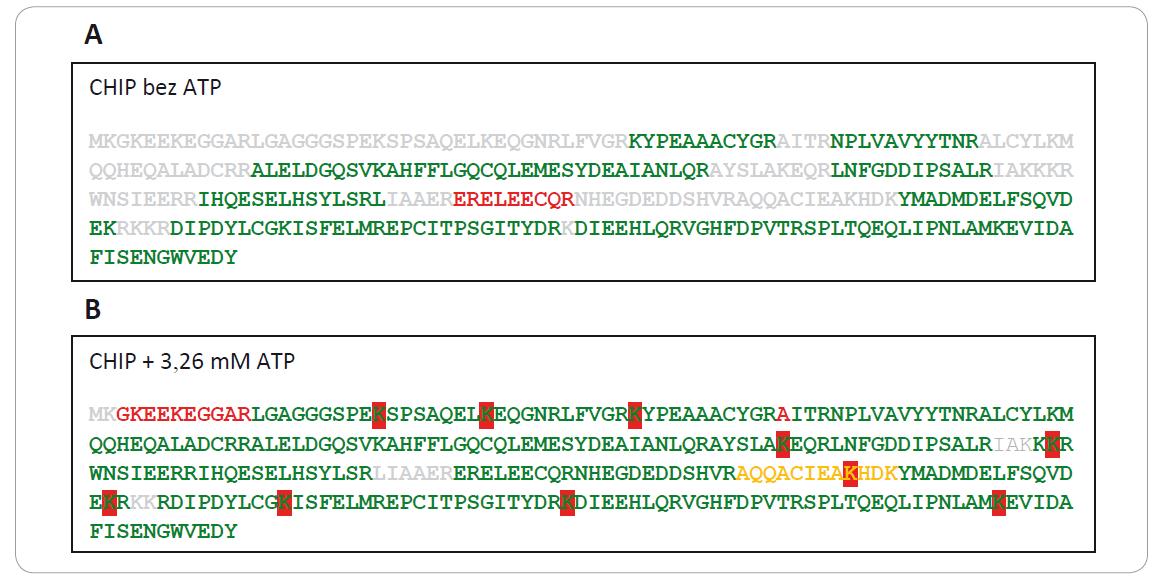 Na obrázku je červenou farbou zvýraznená ubikvitinácia lyzínov v sekvencii CHIP-u s prídavkom (1B) a bez prídavku ATP (1A) do ubikvitínačnej reakčnej zmesi. Peptidy s vysokou konfi denciou (pep. konfi dencia > 95 %) sú znázornené zelenou farbou, peptidy so stredne vysokou konfi denciou (pep. konfi dencia ≤ 95 % a > 50 %) sú znázornené oranžovou farbou, nízko konfi dentné peptidy (pep. konfi dencia ≤ 50 %) sú znázornené červenou farbou a neidentifi kované peptidy sivou farbou písma. CHIP je jednoznačne viac ubikvitínovaný v prítomnosti ATP, zatiaľ čo v neprítomnosti ATP k ubikvitinácii nedochádza.