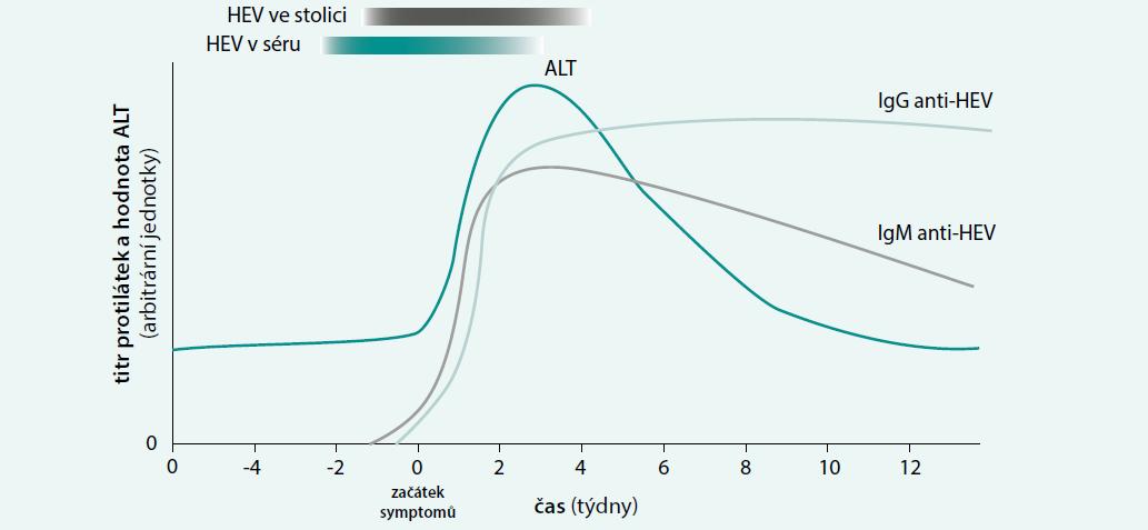 Dynamika hodnoty alaninaminotransferázy (ALT) v séru, titru protilátek (IgM anti-HEV, IgG anti-HEV) v séru a virové nálože v séru a stolici během infekce HEV