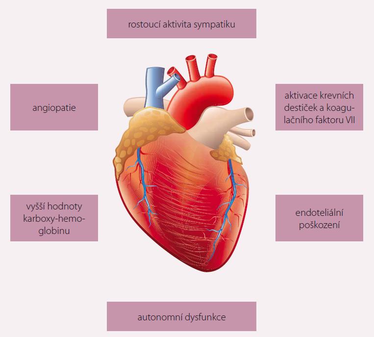 Účinky kardiovaskulárního působení marihuany [7]. Foto: shutterstock.com.