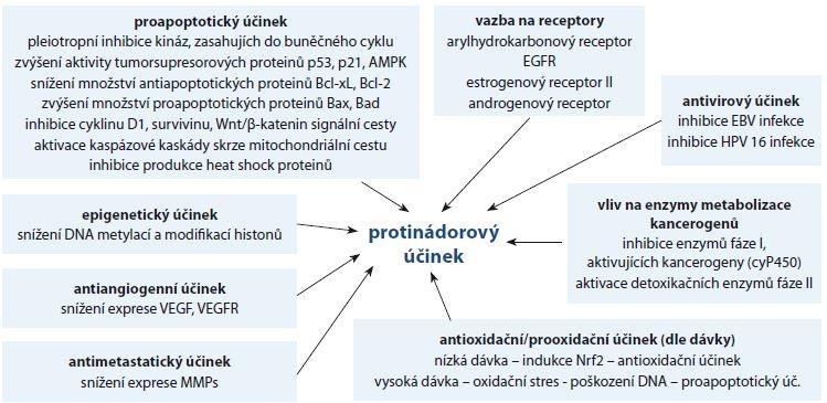 Schéma 1. Jednotlivé mechanizmy protinádorového účinku quercetinu.