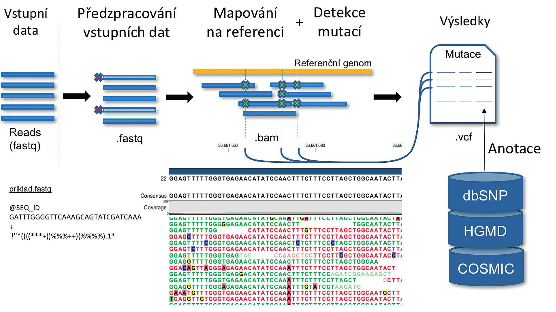 Schéma obecné pipeline pro účely detekce variant v DNA Vstupní data představují sekvenační čtení. Každé sekvenační čtení má přidělen jedinečný identifikátor (SEQ_ID), sekvenci a kvalitu pro každou bázi vyjádřenou ASCII kódem. Následně jsou sekvenační čtení filtrovány podle délky, případně jsou odstraněny jejich nekvalitní konce. Poté jsou sekvence mapovány na referenční genom a detekovány varianty. K variantám jsou v posledním kroku přiděleny informace z vybraných databází, které například umožní rozhodnout, zda a jak je varianta klinicky významná.