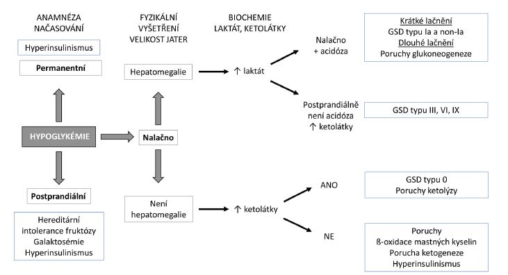 Diagnostický přístup k hypoglykémii. GSD – <i>glykogenóza</i>