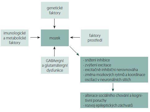 Schematické znázornění patofyziologického modelu komorbidního výskytu poruch autistického spektra a epilepsie – hypotéza excitačně-inhibični nerovnováhy. Převzato a modifikováno z [43]. GABA – gama aminomáselná kyselina<br> Fig. 1. Schematic representation of the pathophysiological model of the comorbid occurence of autism spectrum disorder and epilepsy – hypothesis of excitatory-inhibitory dysbalance. Taken and modified from [43]. GABA – gamma-aminobutyric acid