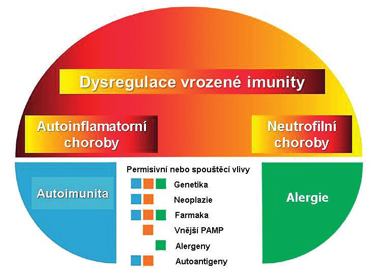Pyoderma gangrenosum v konceptu chorob s autoinflamatorní komponentou.