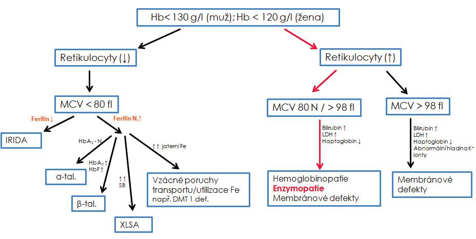 """Diferenciální diagnostika vrozených nesférocytárních hemolytických anémií<br> Základní diferenciální diagnostika může pouze podpořit/vyloučit podezření na enzymový deficit, není však schopna rozlišit jednotlivé enzymové defekty, které umožní rozlišit až biochemické analýzy. N – normální; ↓ – snížený; ↑ – zvýšený; XLSA – sideroblastická anémie s dědičností vázanou na chromozom X; α-tal. – α-talasemie minor; β-tal. – β-talasemie minor; IRIDA – """"iron refractory iron deficiency anemia"""" tzv. anémie z nedostatku železa, která nereaguje na léčbu železem; DMT1 def. – anémie způsobená mutací v genu pro transmembránový transportér železa DMT1; SB – sideroblasty; HbA2 – varianta hemoglobinu dospělého typu skládající se z alfa a delta řetězců; HbF – fetální hemoglobin; Fe – železo, Hb – hemoglobin; MCV – střední objem erytrocytu; HbF – fetální hemoglobin; LDH – laktátdehydrogenáza."""