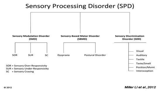 Schéma poruch senzorického zpracování.