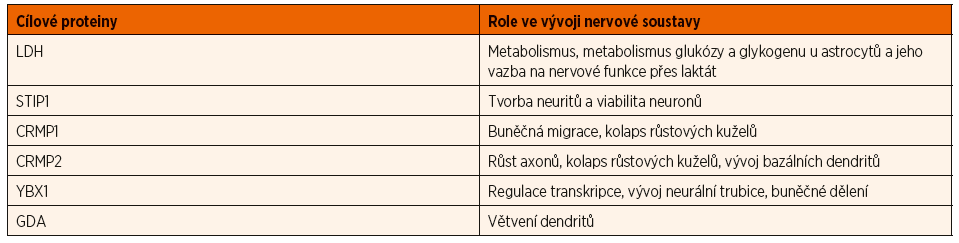 Úloha proteinů zacílených maternálními autoprotilátkami spojenými s PAS při vývoji nervové soustavy (upraveno podle Jones and Van de Water, 2019).