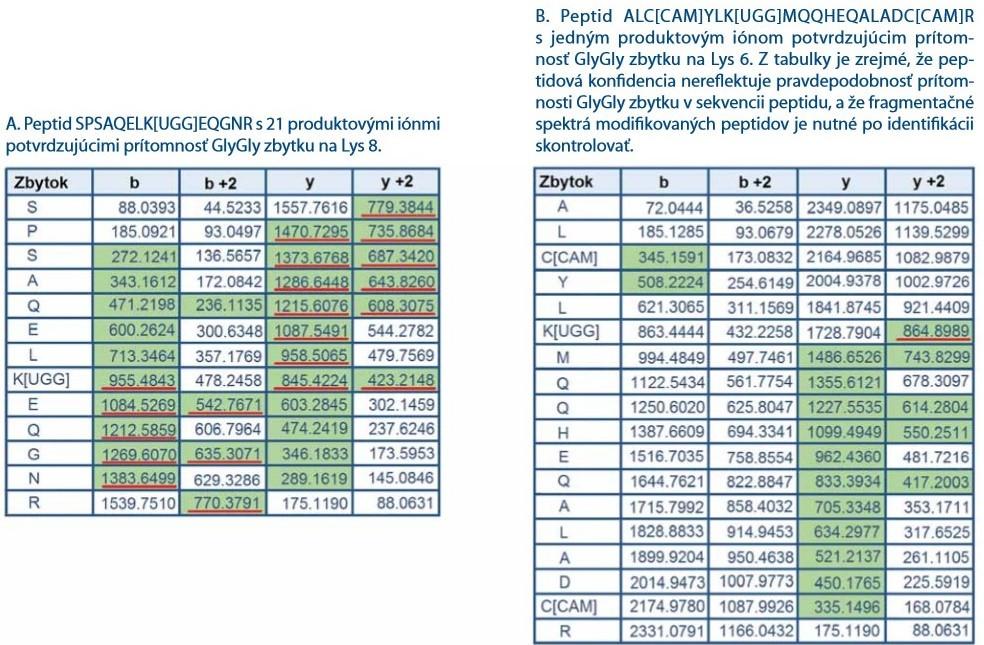 Zoznamy produktových iónov reprezentujúcich dva vybrané peptidy z proteínu CHIP nesúce GlyGly zbytok. Na základe identifi kácie prehľadávacím algoritmom ProteinPilot 4.5.0.0. bola obom peptidom pridelená vysoká peptidová konfi dencia (pep. konfi dencia > 99 %). Zelenou farbou sú vyznačené produktové ióny spoľahlivo identifi kované v fragmentačnom spektre tandemovej hmotnostnej spektrometrie. Červenou farbou sú podčiarknuté iba produktové ióny, ktoré potvrdzujú GlyGly zbytok v peptide a zahrňujú charakteristický posun m/z o 114 Da (zbytok GlyGly).