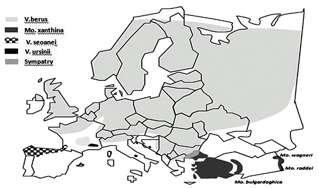Distribúcia jednotlivých druhov hadov z čeľade Viperideae v Európe. Upravené podľa [1].