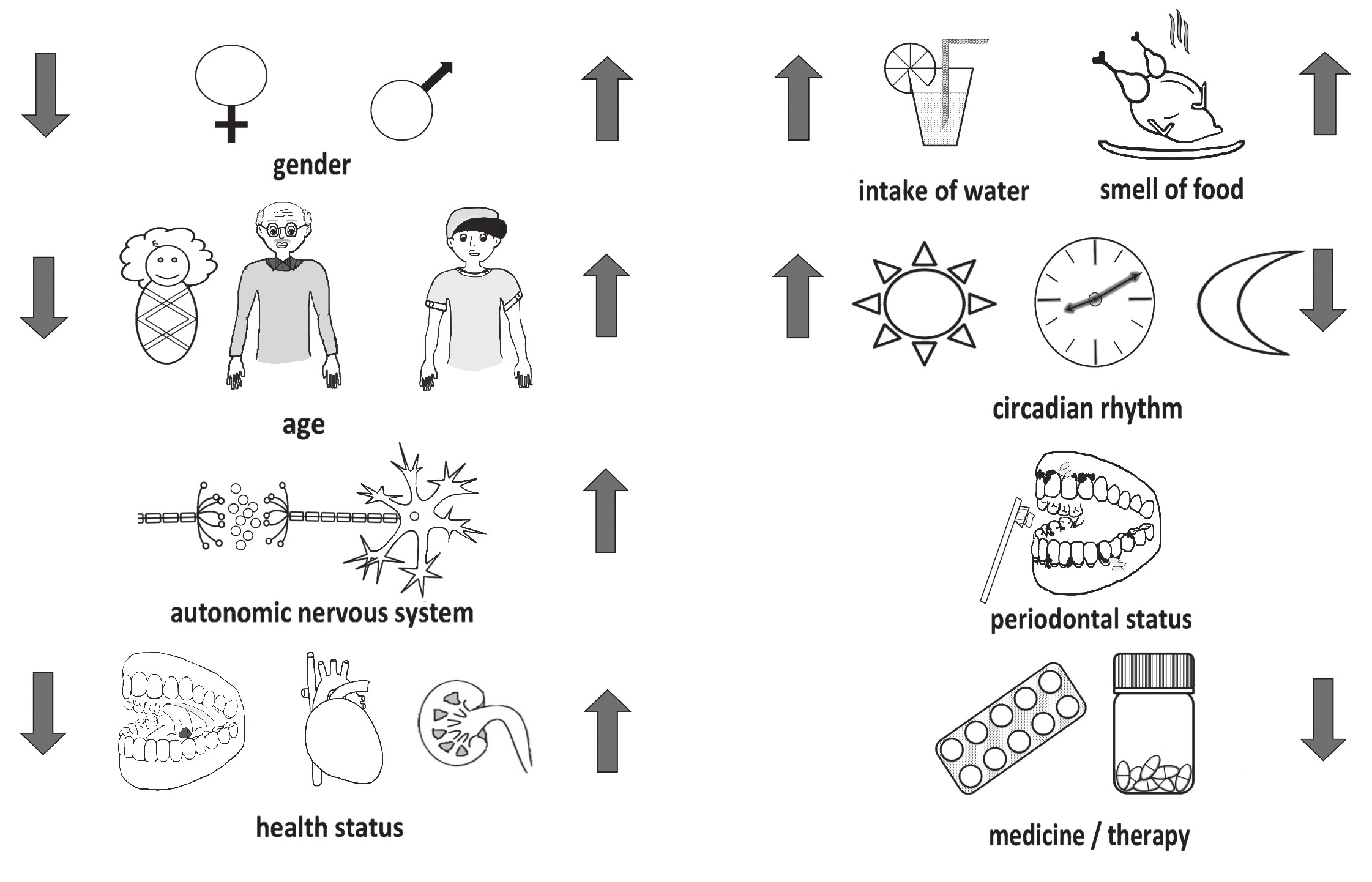 Factors influencing the production of saliva include e.g. gender, age, autonomous nerve system, circadian rhythm, water intake, sensoric stimuli, oral and systemic health status, and medication and cure