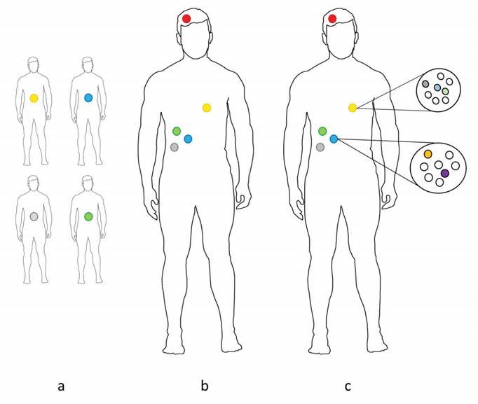 Klasifikace metod nádorové fylogenetiky na základě typu studie.