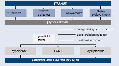 Schéma   Provázanost patogenetických procesů mezi věkem, svalovou funkcí a rizikem diabetu a kardiovaskulárního onemocnění. Upraveno podle [18]