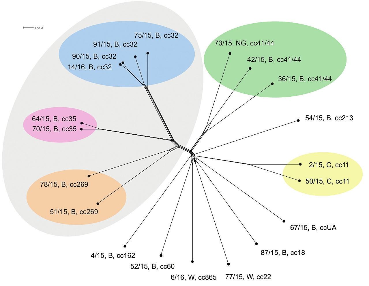 """Vizualizace genetické diverzity na úrovni schématu """"all loci"""" u 20 izolátů z IMO, 2015, ČR<br> Figure 4. Visualisation of genetic diversity at the all loci level in 20 isolates from IMD, Czech Republic 2015"""
