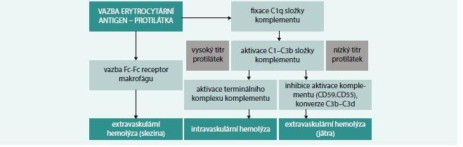 Schéma 1. Mechanizmy vzniku hemolýzy u autoimunitní hemolytické anémie