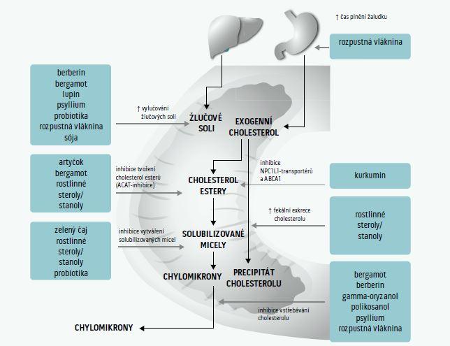 Schéma 1. Nutraceutika inhibující střevní absorpci cholesterolu a podporující jeho exkreci. Upraveno podle [299]