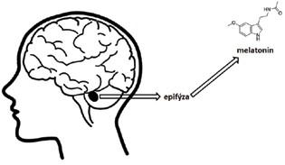 Chemická struktura melatoninu, hormonu produkovaného epifýzou