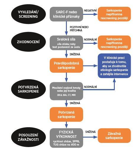 Schéma 3 Algoritmus pro vyhledávání–hodnocení–potvrzení diagnózy sarkopenie. Podle (12)