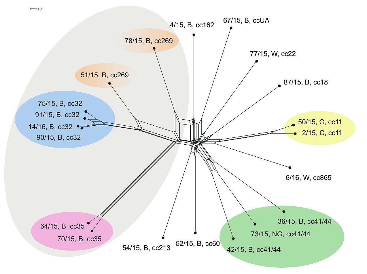 Vizualizace genetické diverzity na úrovní schématu rMLST u 20 izolátů z IMO, 2015, ČR<br> Figure 2. Visualisation of genetic diversity at the rMLST level in 20 isolates from IMD, Czech Republic 201