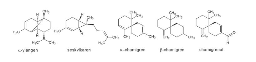 Hlavní složky silice S. chinensis