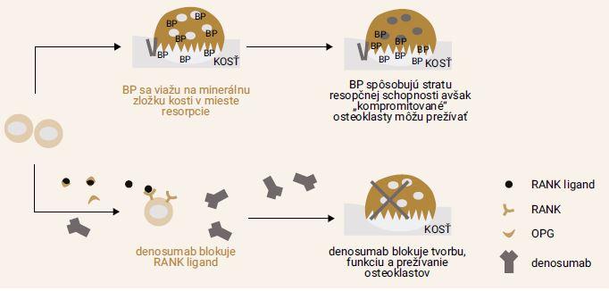 Schéma 5 | Antiporotická liečba v onkológii