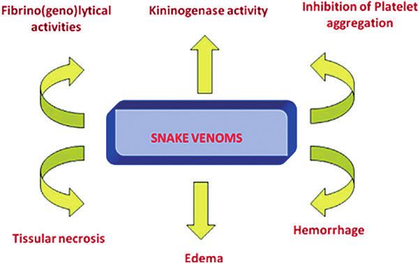 Patofyziologické účinky hadieho jedu. Upravené podľa [24].