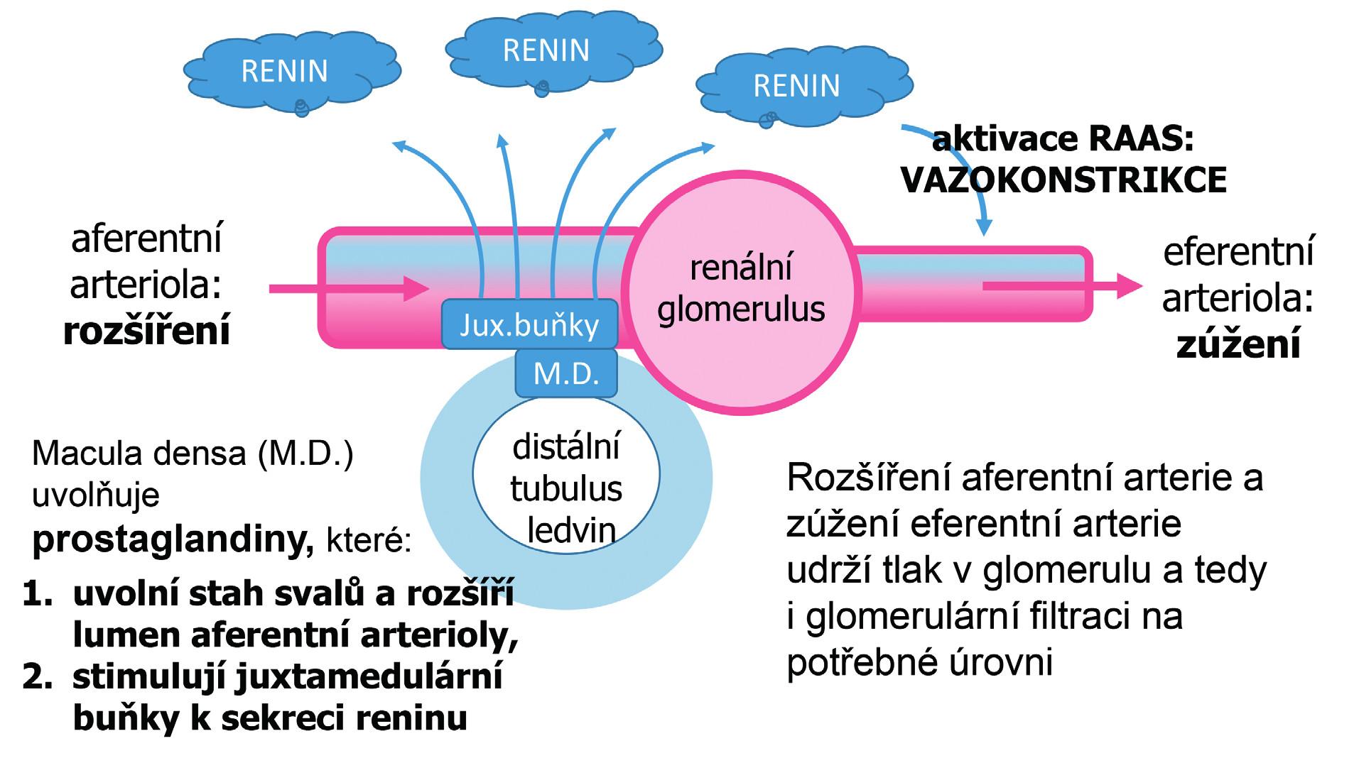 Reakce organismu na snížení glomerulární filtrace, např. při snížení objemu tělesných tekutin vyvolaném diuretickou léčbou