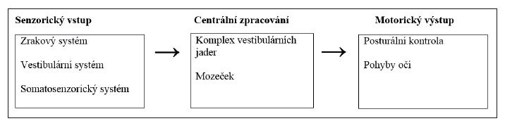 Znázornění organizace vestibulárního systému.