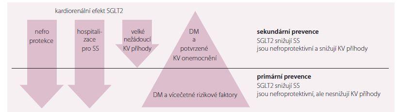 SGLT2 v primární a sekundární prevenci prevenci pacientů s DM 2. typu. Upraveno dle [17].<br> SS – srdeční selhání; DM – diabetes mellitus; KV – kardiovaskulární