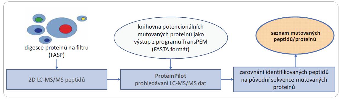 Schéma 2. Diagram zobrazující kombinaci softwaru TransPEM navazujícím na bioinformatickou analýzu jednonukleotidových polymorfi zmů s proteomickou analýzou za účelem detekce mutovaných peptidů/proteinů.