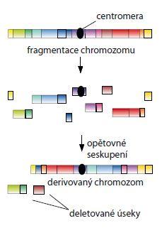 Schéma 1. Schéma vzniku chromotripse.